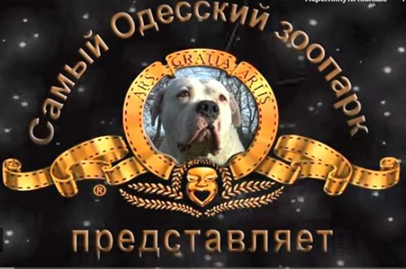 В Одесском зоопарке сняли клип в честь наступающего года Собаки