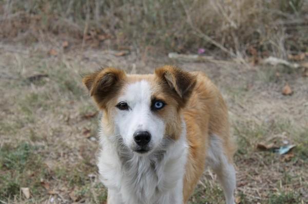 В Черноморске спасли упавшую в люк собаку