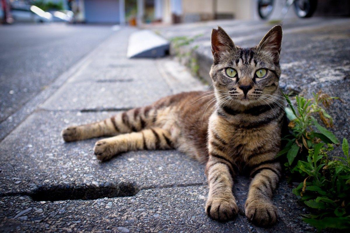 В Одессе будут вакцинировать и стерилизовать бездомных кошек