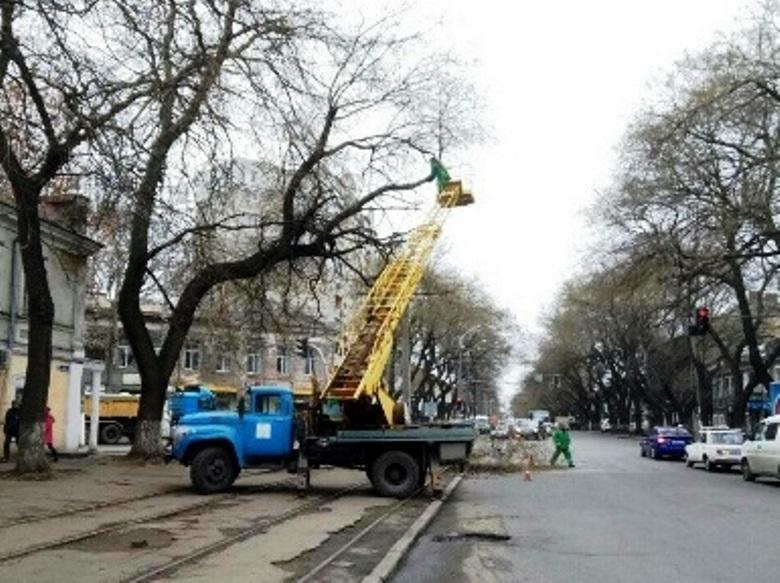 Обрезка деревьев: на Степовой затруднено движение транспорта