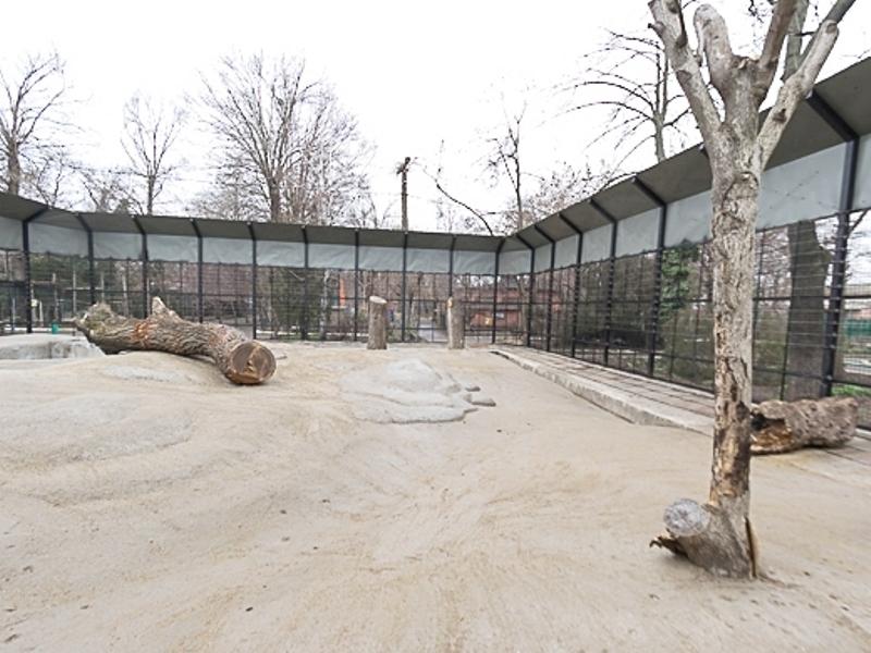 В одесском зоопарке мишек ждет новоселье