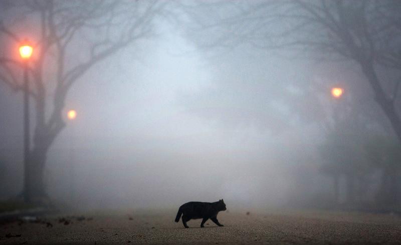 Из-за тумана в Одессе и области объявлено штормовое предупреждение