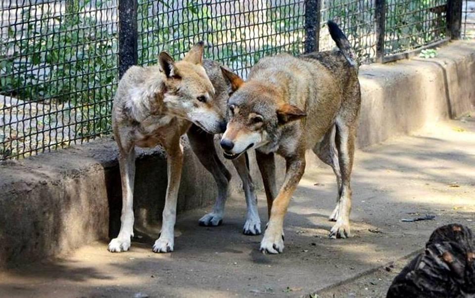 Одесситам предлагают выбрать лучшую пару питомцев зоопарка
