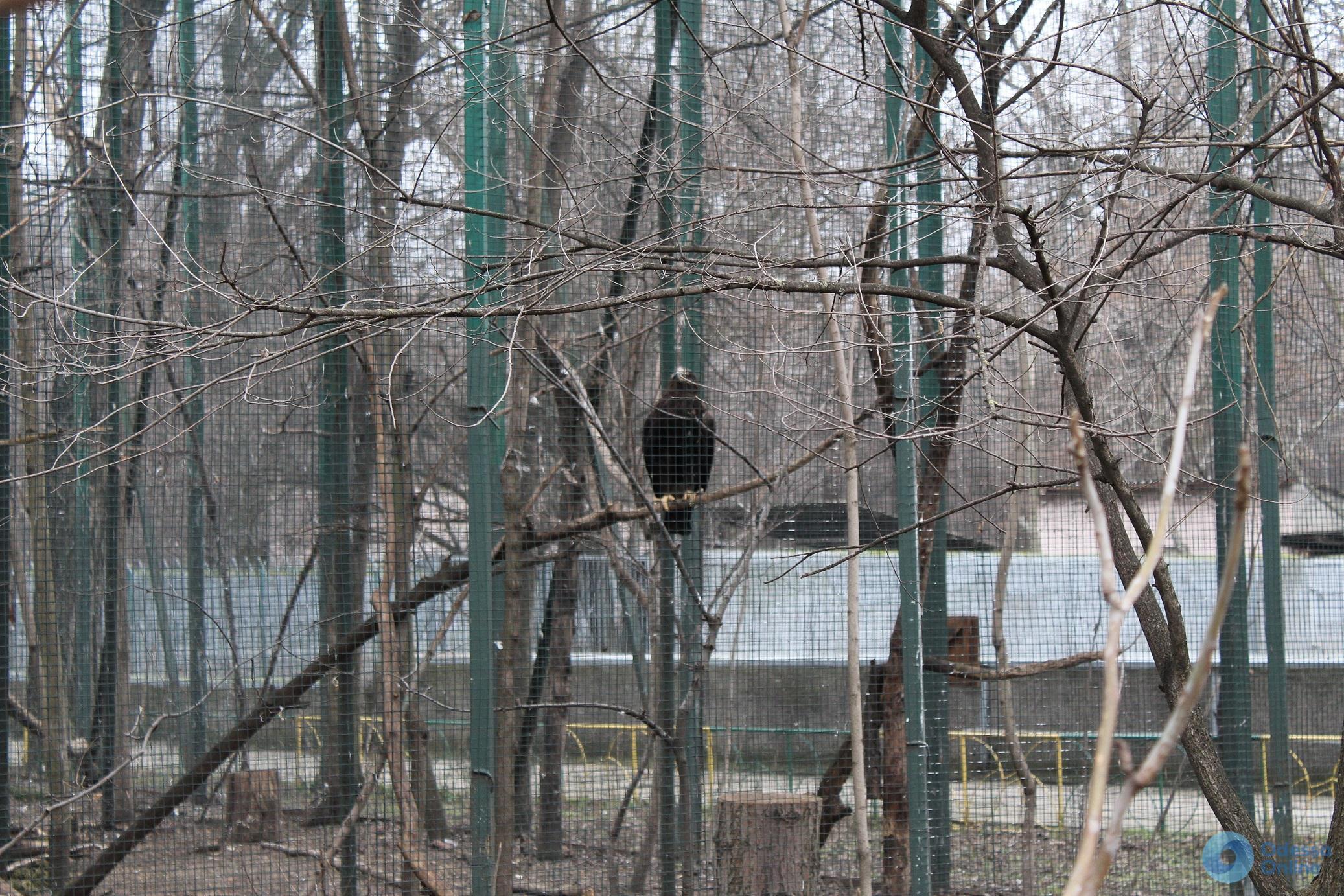 Два года спустя: как живут отобранные у одесских фотографов краснокнижные птицы
