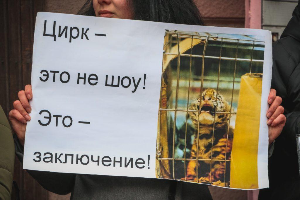 Под одесским цирком снова митинговали зоозащитники