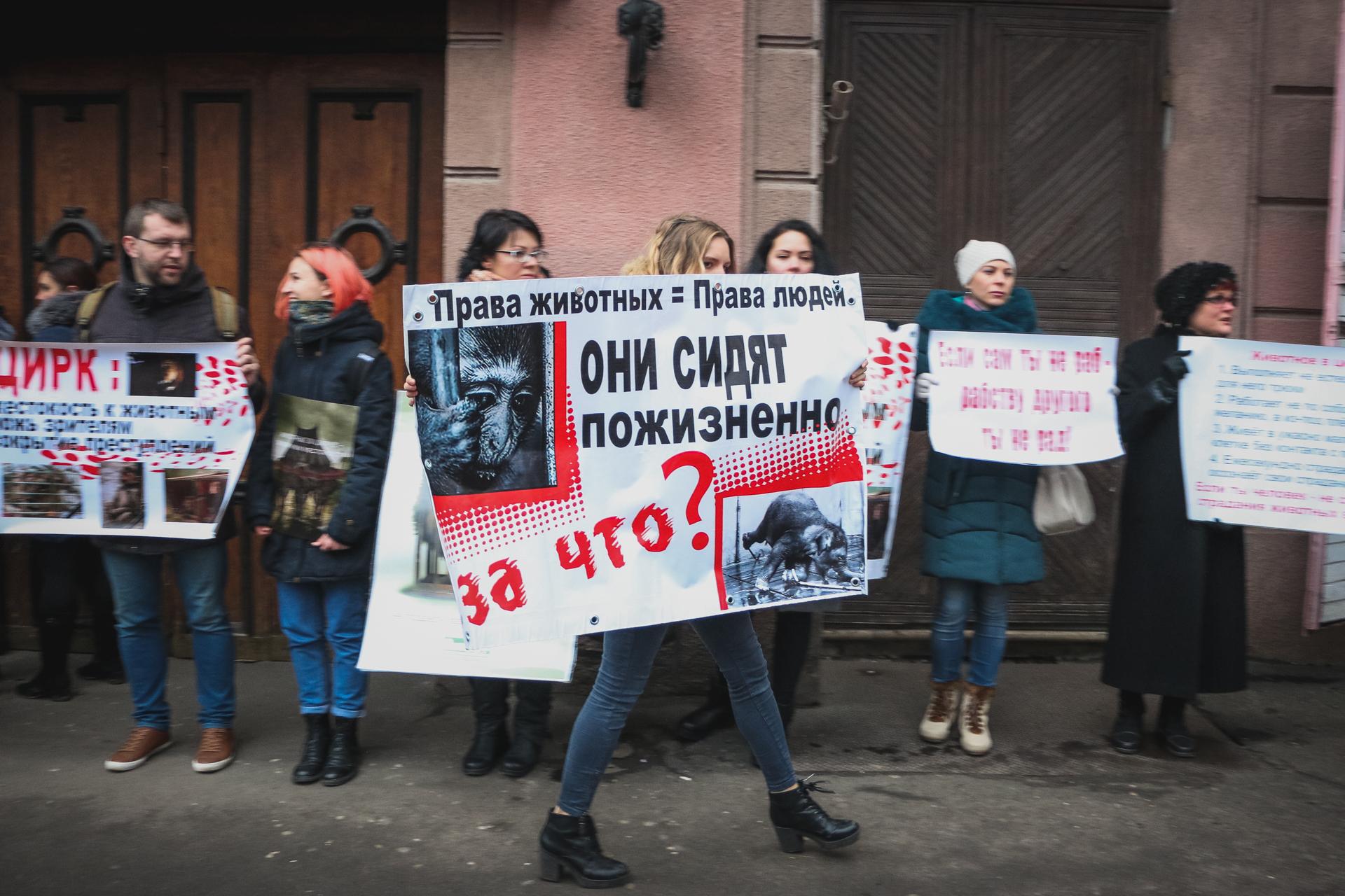 «Права животных = права людей»: под одесским цирком снова митинговали зоозащитники
