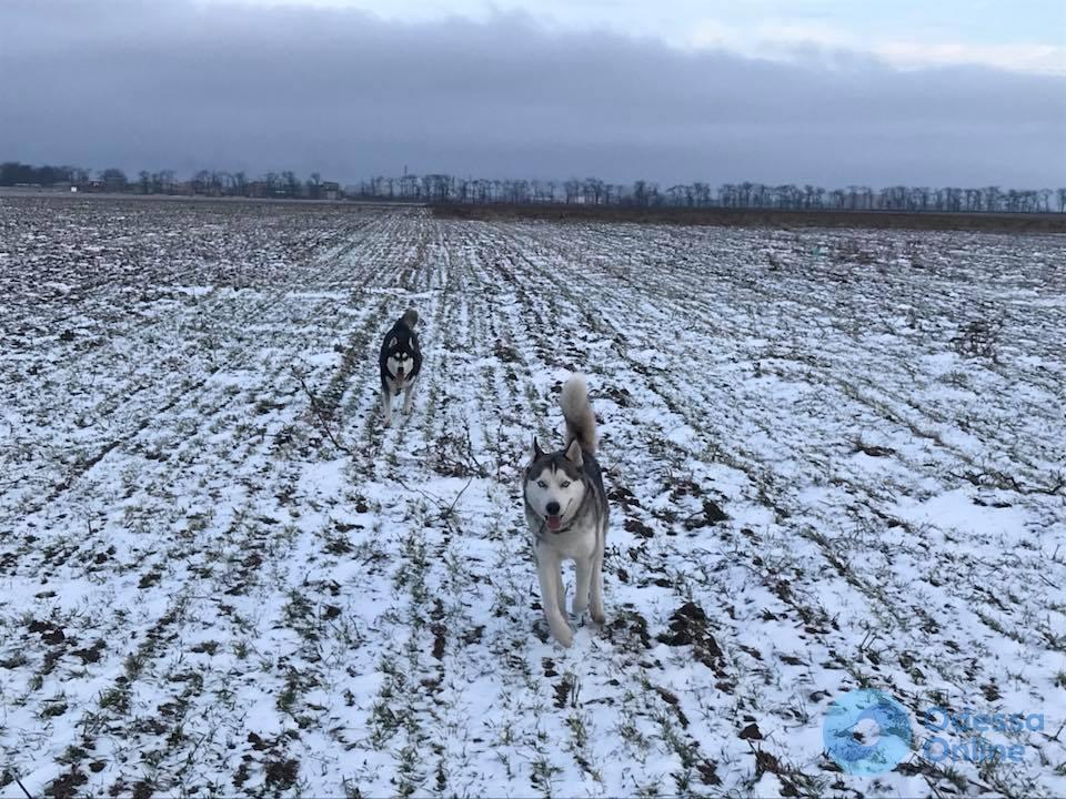 Одесса: конные мошенники похищают собак ради выкупа