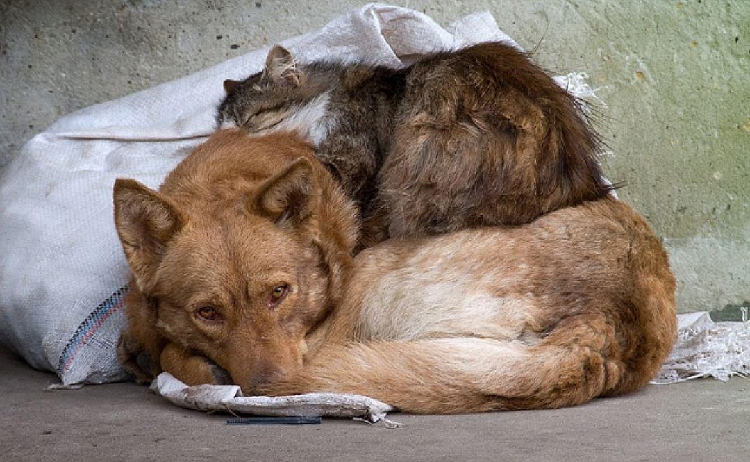 Одесские бездомные животные будут под городской опекой