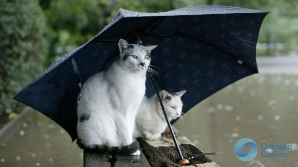 Сильный дождь и туман: по Одессе и области объявлено штормовое предупреждение