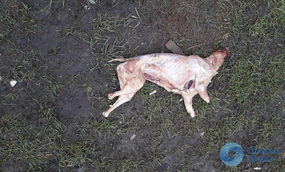 Возле парка Победы нашли освежеванный труп собаки