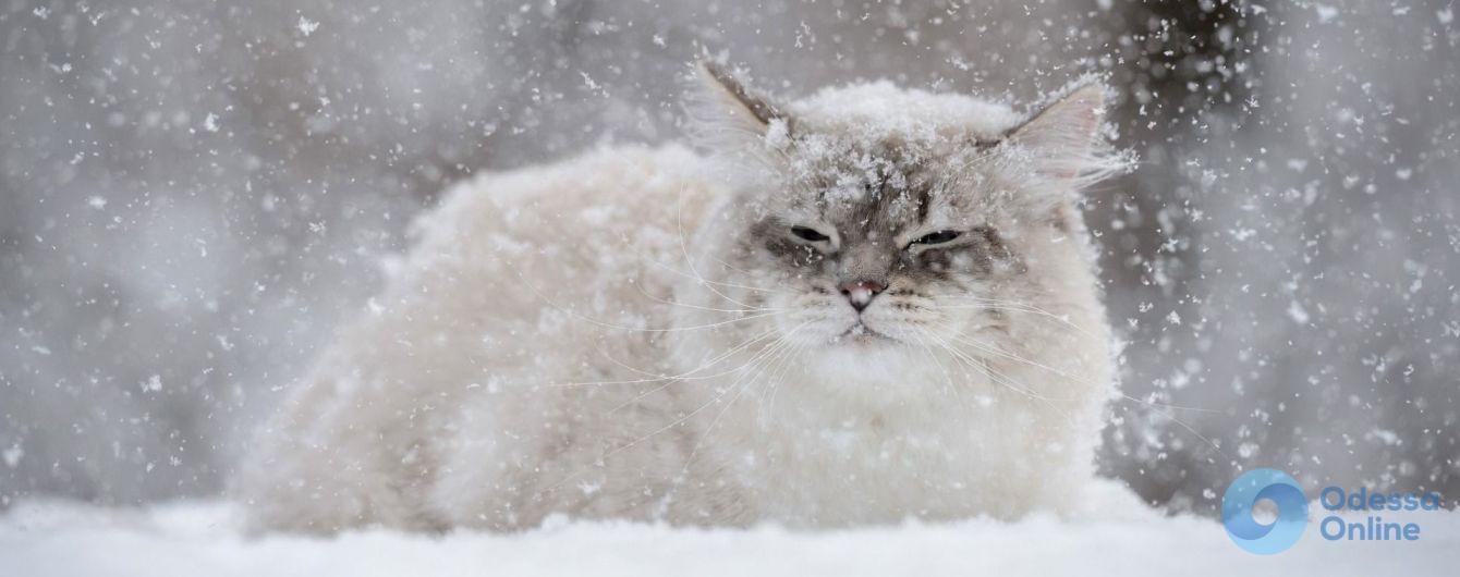 Метель и гололедица: в Одессе и области сохраняется штормовое предупреждение