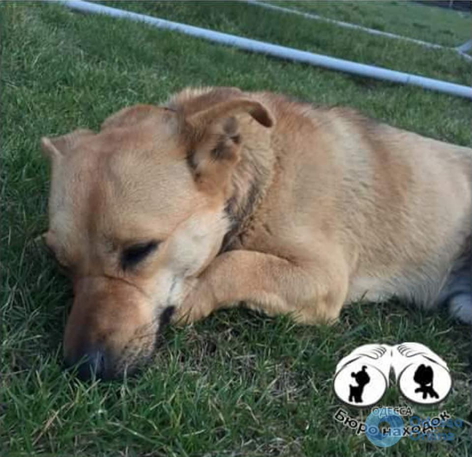 Жертва догхантеров: пенсионер не пережил отравления своей собаки