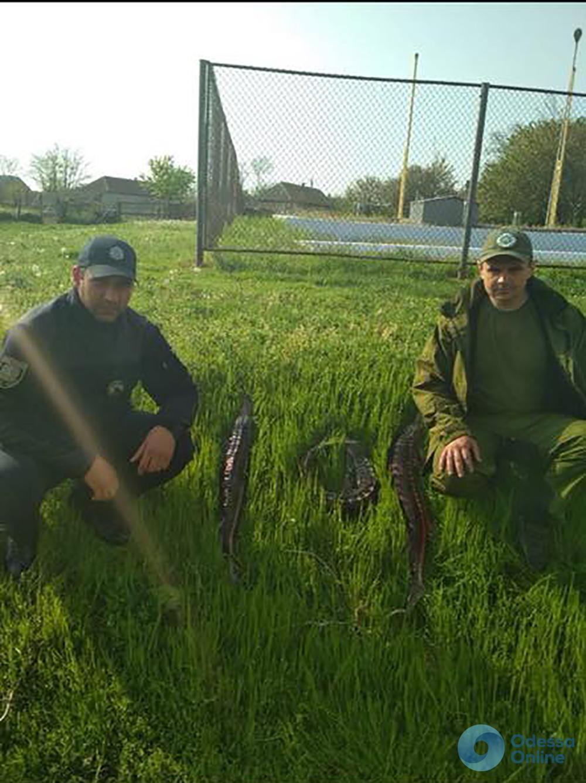 В Одесской области задержали браконьеров с севрюгой