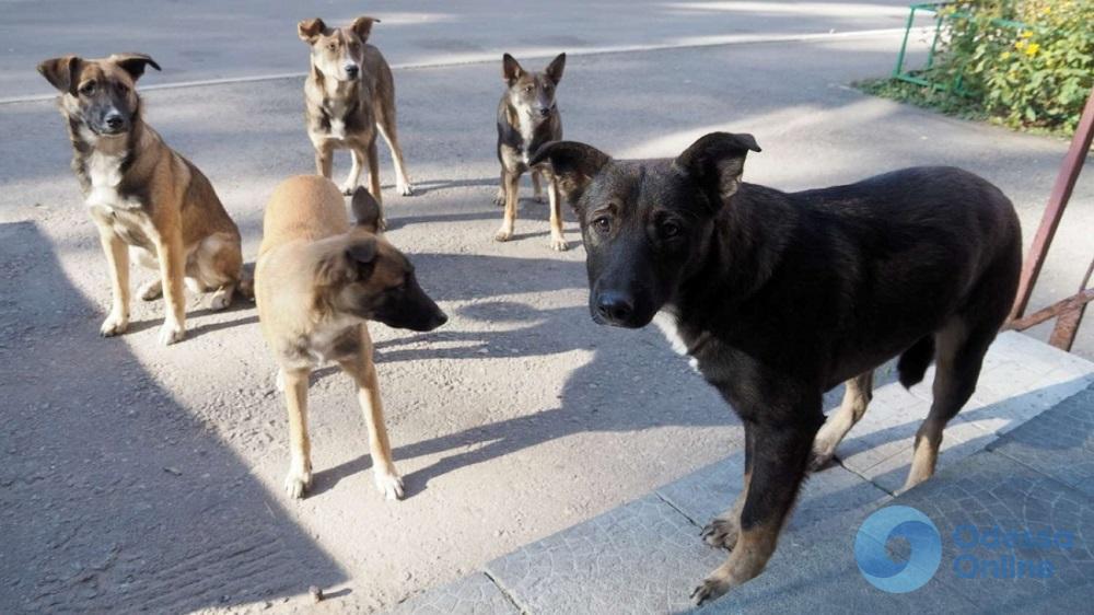 В Аккермане бродячие собаки с начала года покусали три десятка жителей