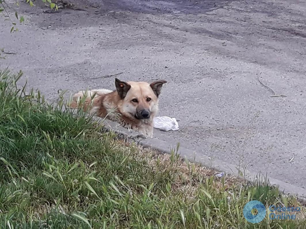 В Черноморске женщину покусала бездомная собака
