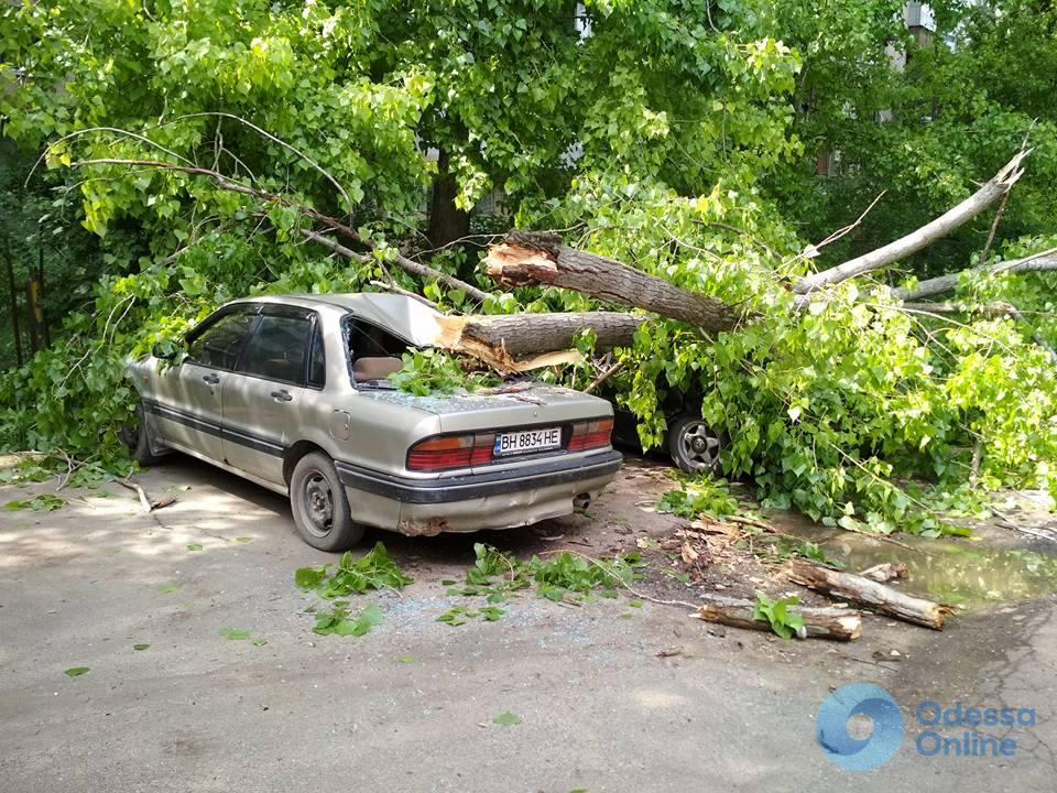 Деревья vs автомобили: в Одессе ветка повредила еще две машины