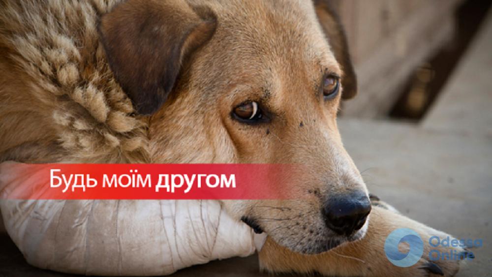 Одесситов и гостей города приглашают на первый благотворительный фестиваль в поддержку бездомных животных