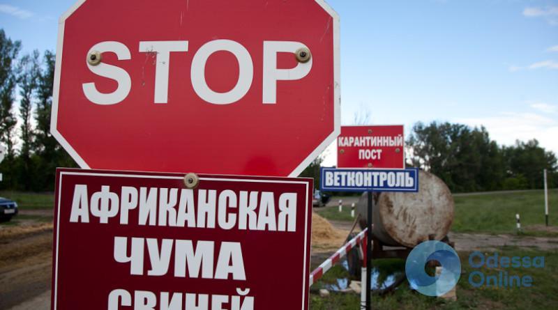 На юге Одесской области обнаружена африканская чума свиней