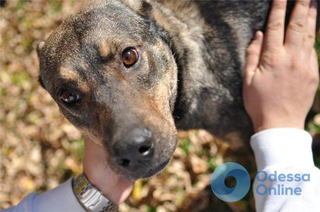Одесская область: спасатели достали из колодца собаку