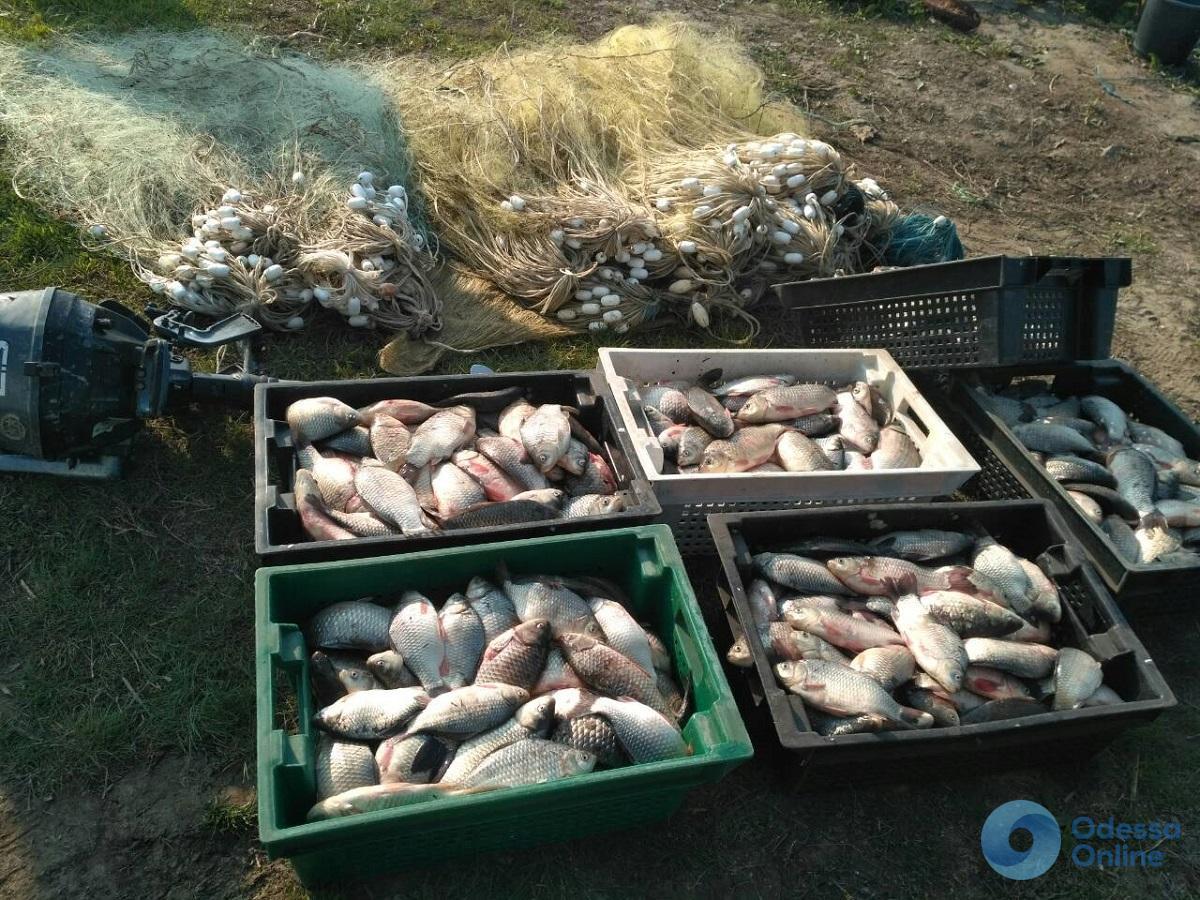 В Одесской области за неделю браконьеры «нарыбачили» на 58 тысяч гривен
