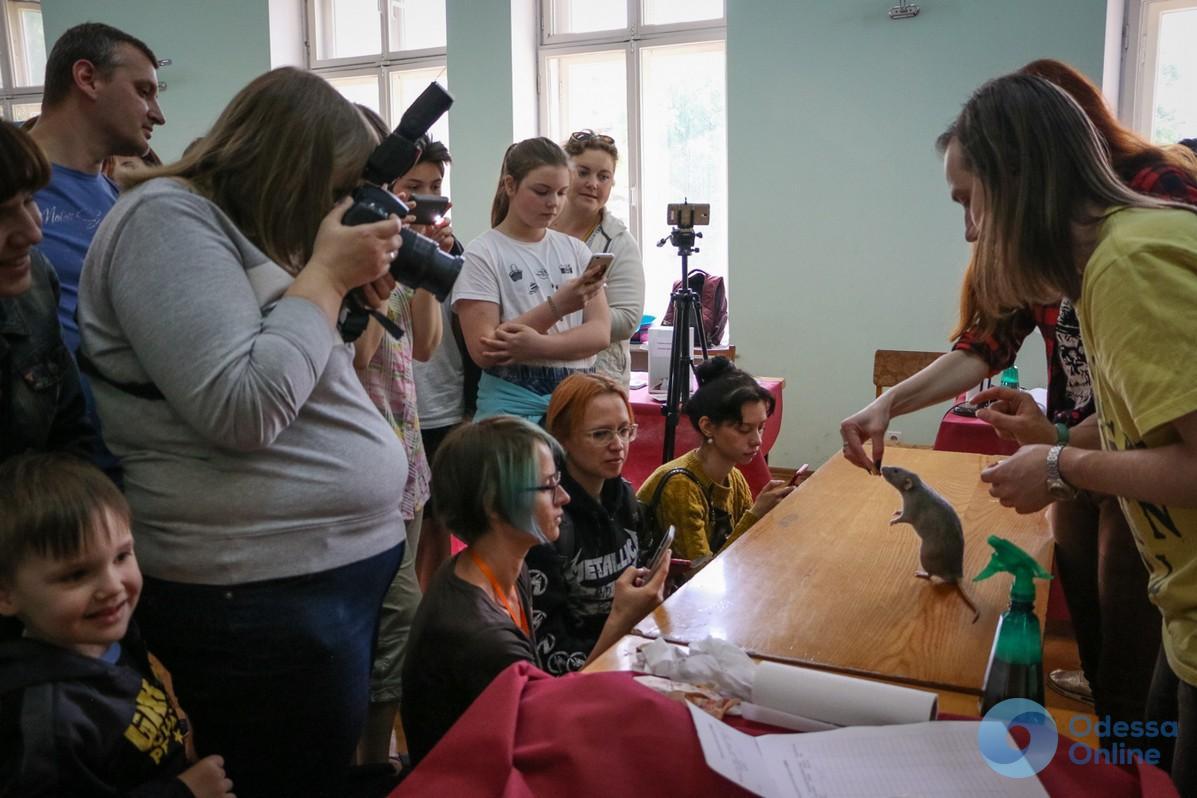 В Одессе прошла выставка декоративных крыс