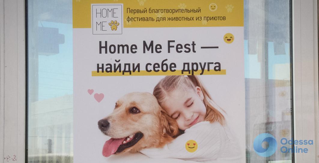 Одесса: бездомные животные нашли хозяев в ходе фестиваля