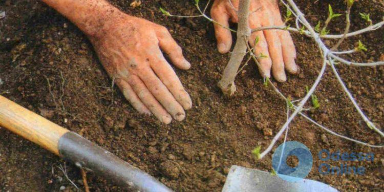 На Ольгиевской высадили сотню деревьев