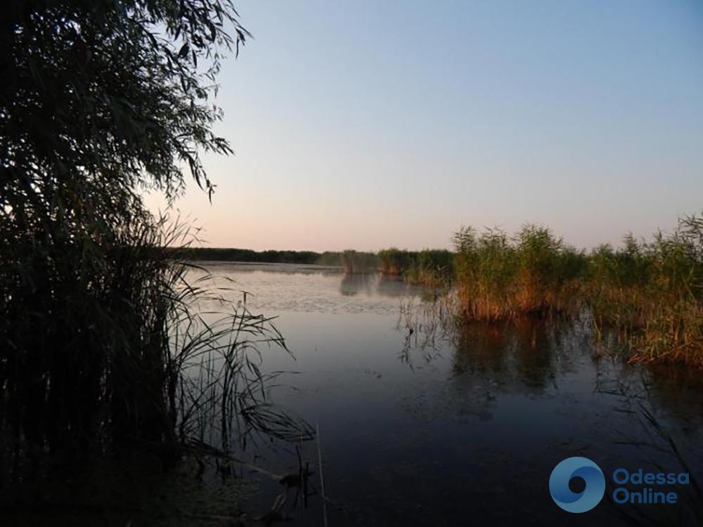 Одесская область: браконьер умудрился наловить 115 кг рыбы