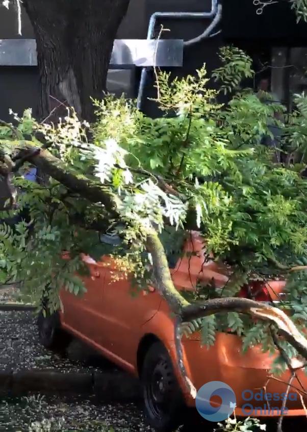 На Бунина ветка дерева упала на машину