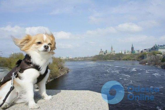 В Одессе сохраняется штормовое предупреждение