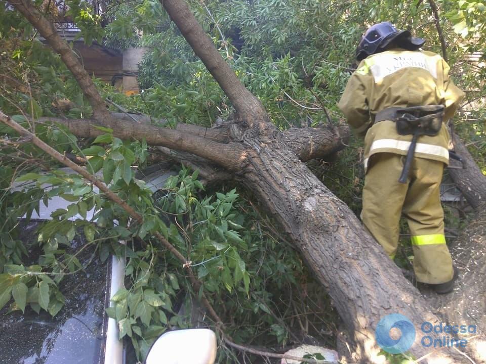 Одесские спасатели убирали рухнувшее на проезжую часть дерево