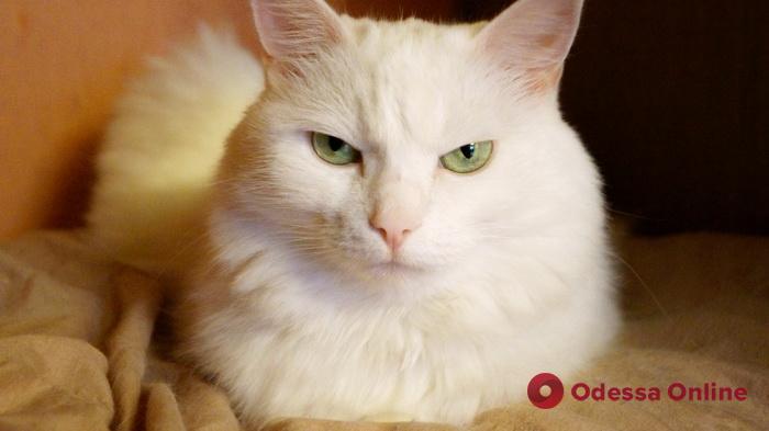 В Одессе бесплатно вакцинируют и стерилизуют бездомных котов