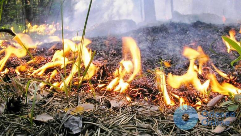 Чрезвычайная пожарная опасность ожидается в Одесской области