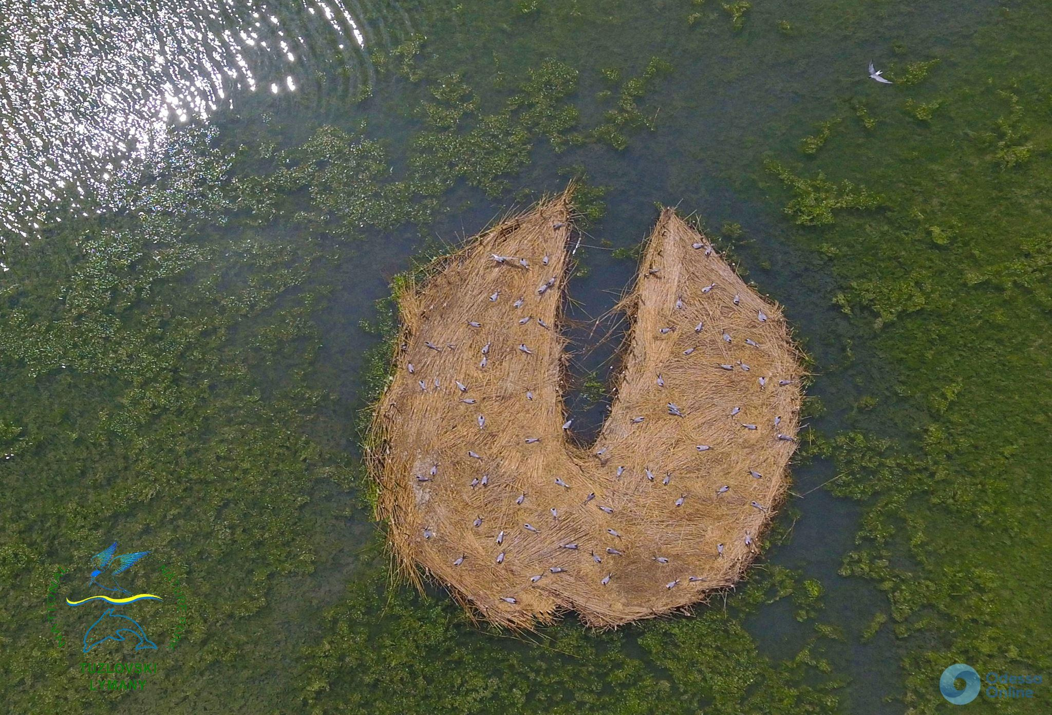 «Крылья ангела»: в НПП «Тузловские лиманы» новый остров