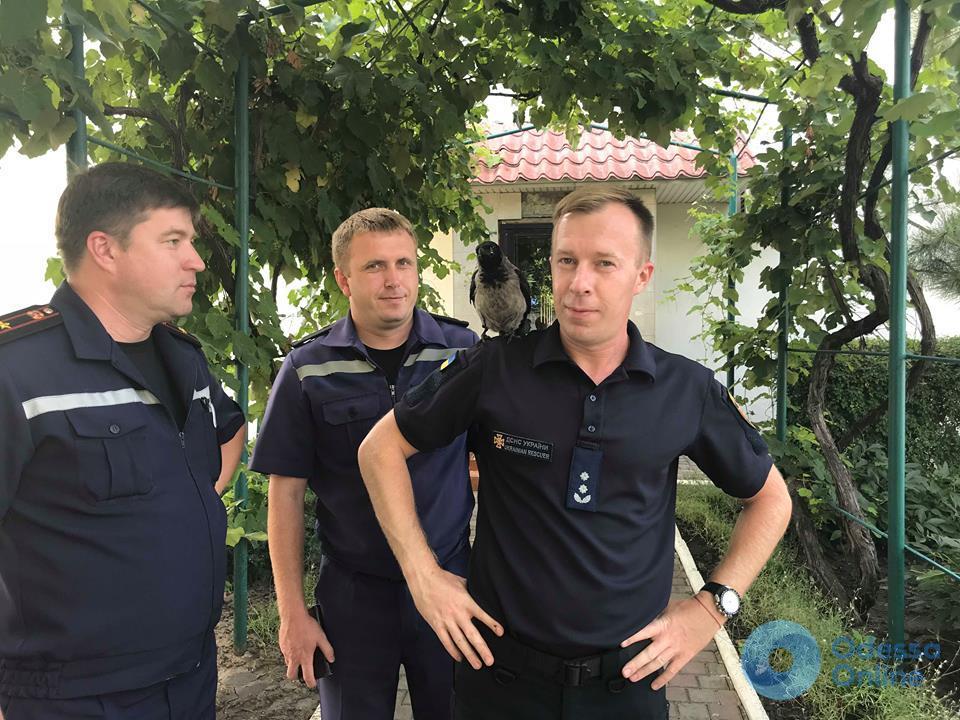В Черноморске появился пернатый «спасатель»