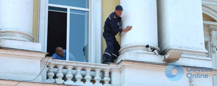 Спасатели сняли котенка со здания управления «Одесской железной дороги»