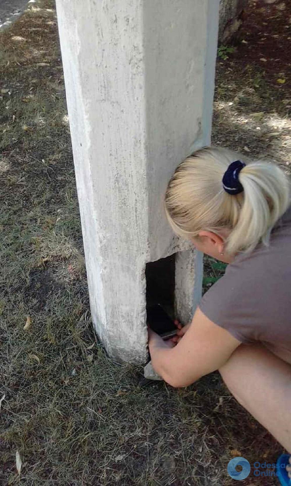 Одесситы спасали застрявшего внутри фонарного столба котенка