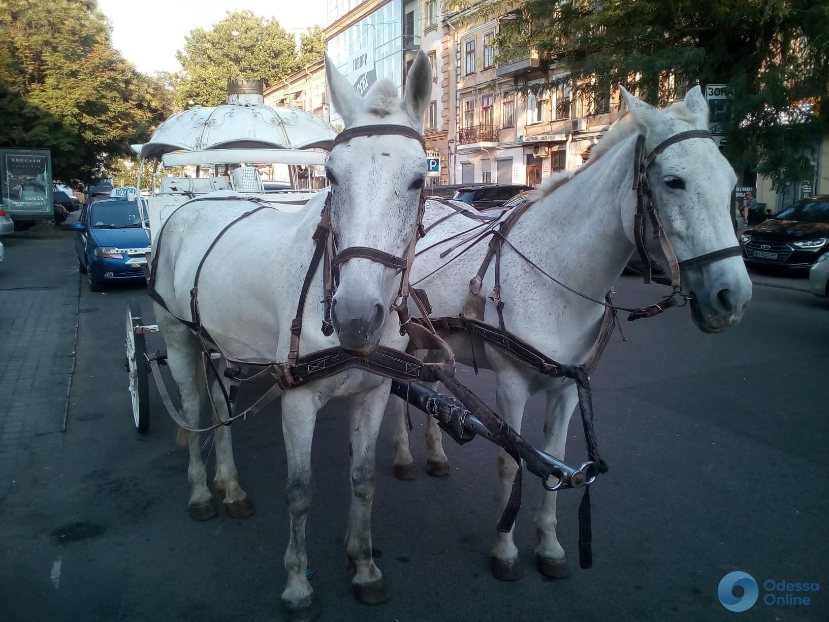 Одесса: активист привел к райотделу карету с лошадьми