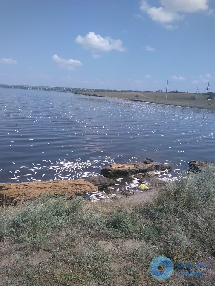 Под Одессой в Хаджибейском лимане массово гибнет рыба (фото)