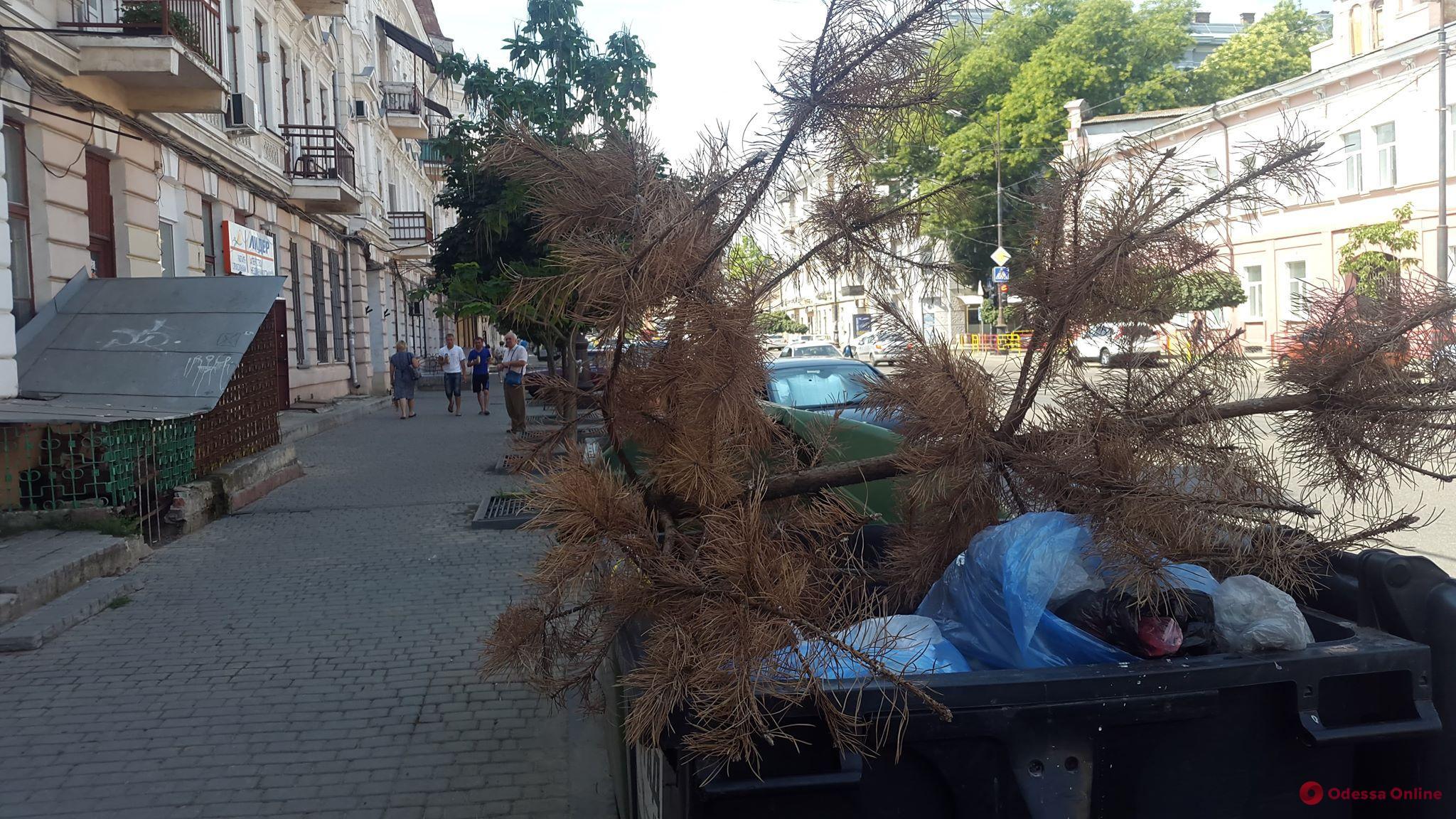 Еще один слабак сдался: в конце июля одессит попрощался с новогодним деревом (фотофакт)