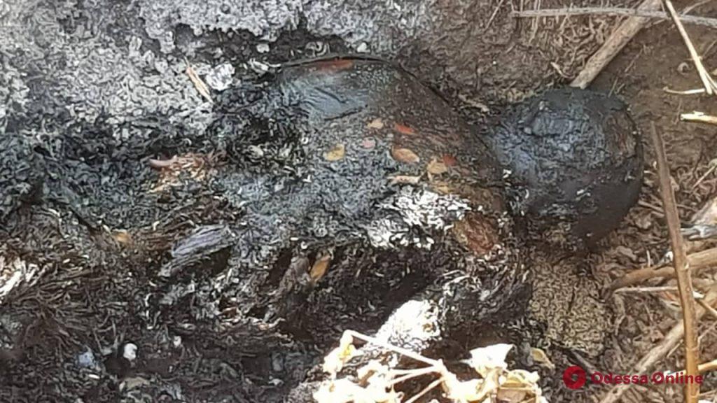 Одесская область: в Сергеевке нашли сожженное тело пропавшей женщины (осторожно, фото, обновлено)