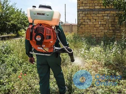 Одесские коммунальщики осваивают новый метод борьбы с амброзией