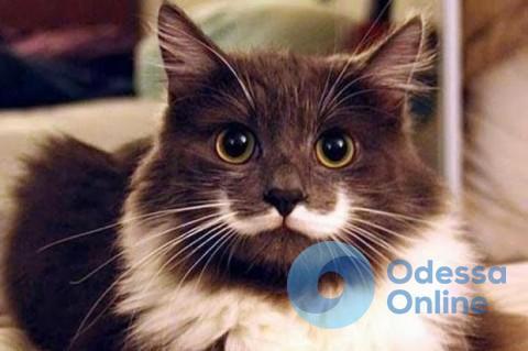 Одесситка попросила дезинсектора отравить котов в своем дворе (аудио)