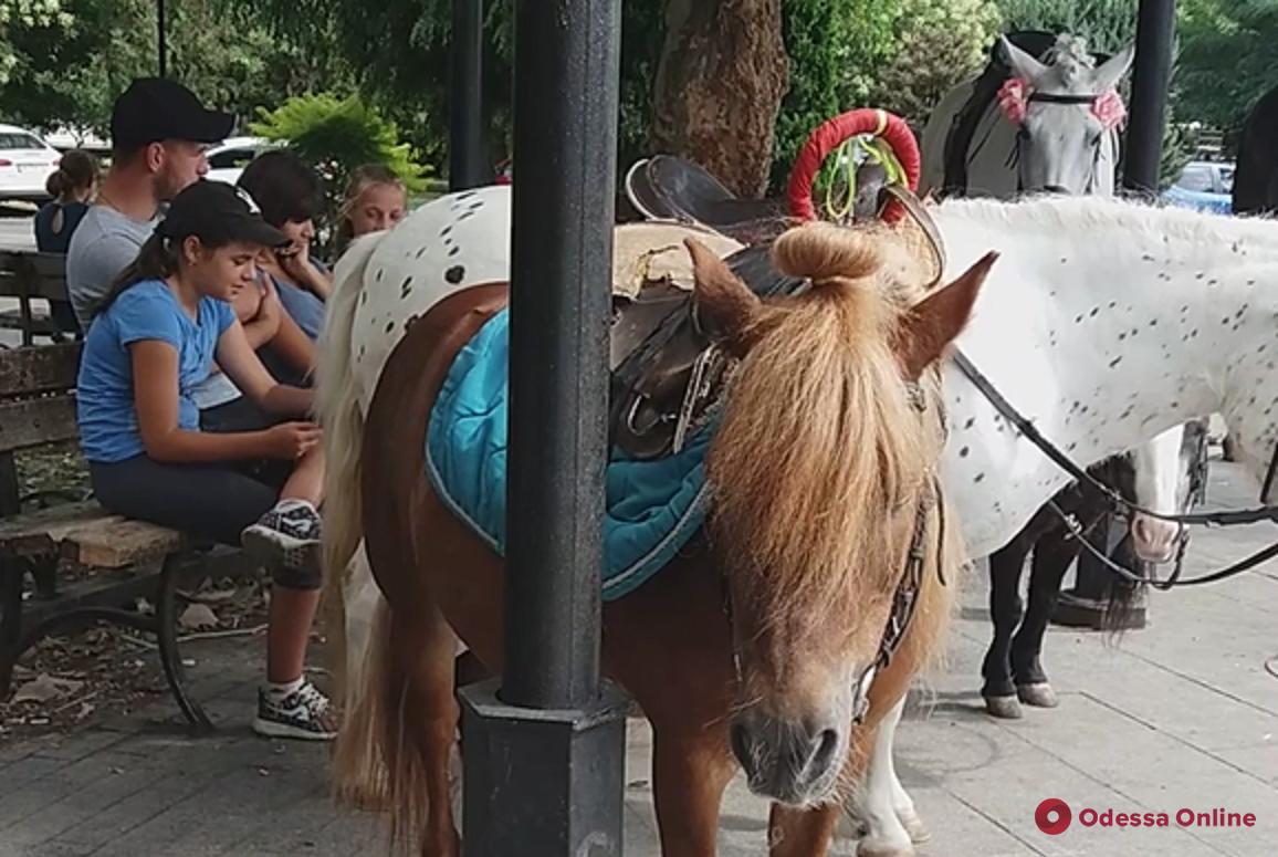 Издевательства продолжаются: в Одессе лошадей держат на солнцепеке