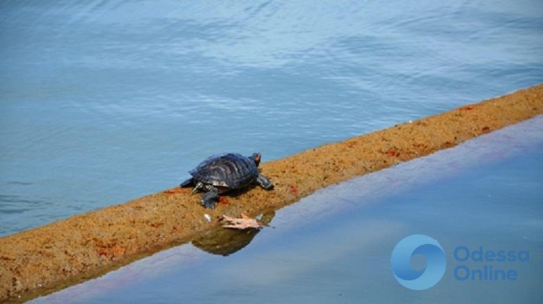В одесском парке подростки стреляли по черепахам