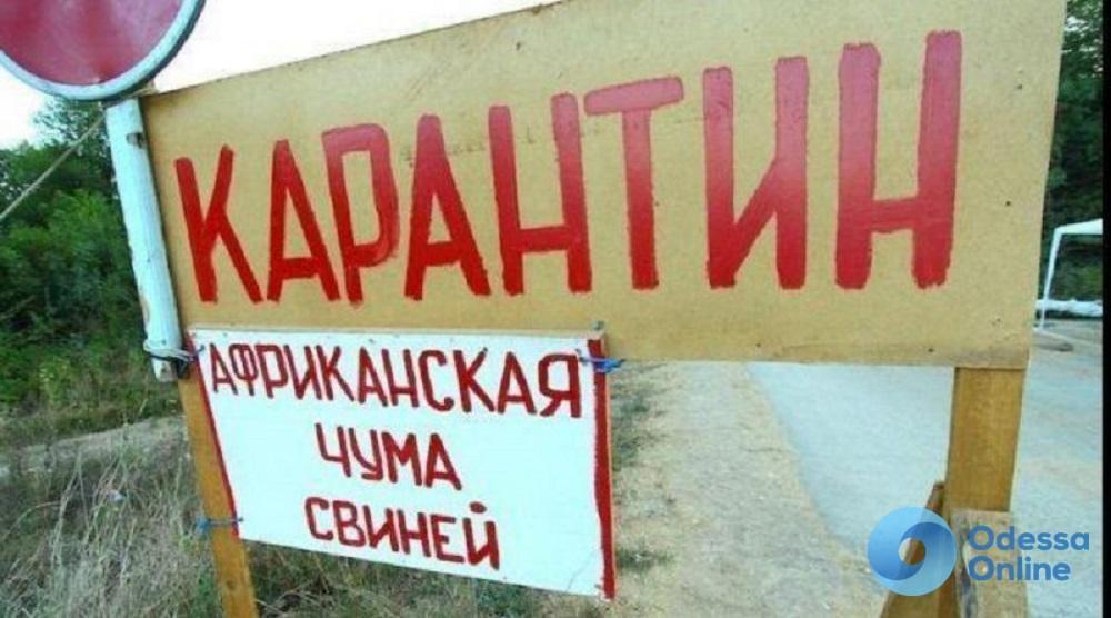В Одесской области из-за вспышки АЧС уже убили почти 3 тыс. свиней