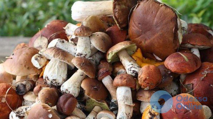 В Одесской области 5 человек отравились грибами