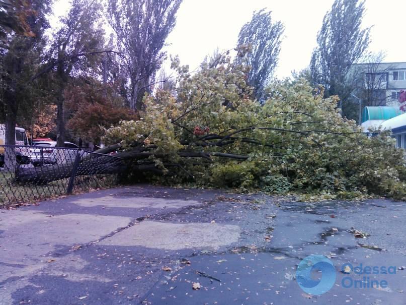 Одесская область: в Николаевке прошел сильный ливень
