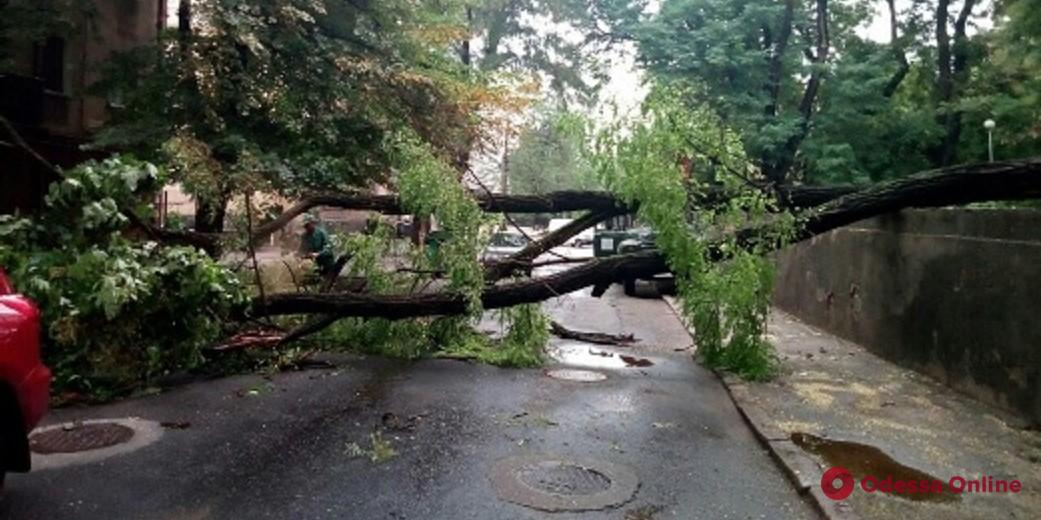 Одесса: в результате ночной непогоды повалены 6 деревьев