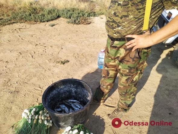 В Одесской области браконьеры наловили кефали на 48 тысяч гривен